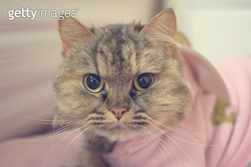 고양이 란초 - gettyimageskorea