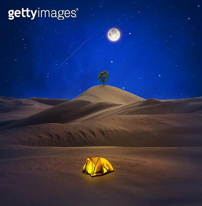 이집트 바하레이사막과 나무 합성 - gettyimageskorea