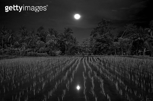 Full moon rising over rice paddy - gettyimageskorea