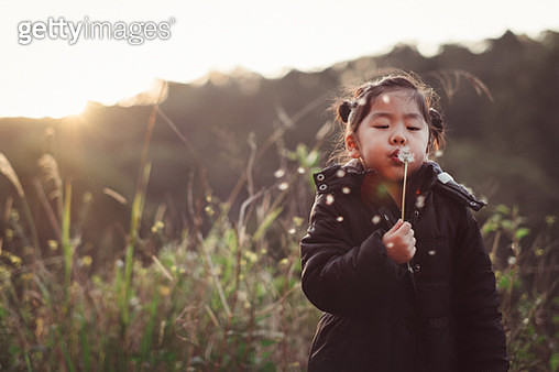 Young Girl Blowing On Dandelion At Sunset - gettyimageskorea