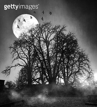 Trees Against Full Moon At Dusk - gettyimageskorea