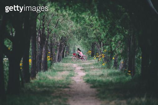 나무터널과 루드베키아, 자전거를 타는 아이 - gettyimageskorea