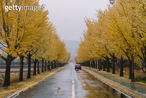 경주 통일전의 노란 은행단풍 가을풍경 - gettyimageskorea