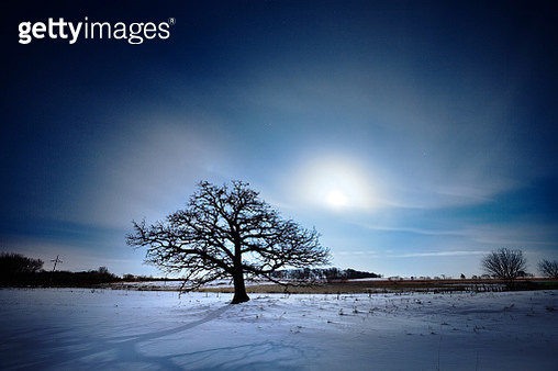 Spooky Oak Tree by Moonlight - gettyimageskorea