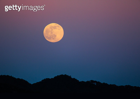 The Honey Moon - gettyimageskorea