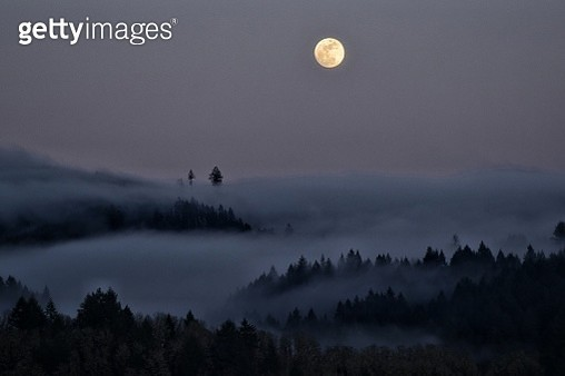 Silhouette Trees And Foggy Weather Against Sky At Dusk - gettyimageskorea
