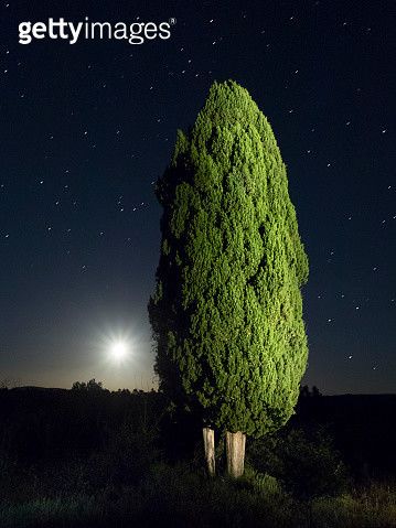 Cypress moon and under the stars. - gettyimageskorea
