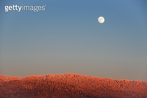 Moon over frosty Bohemian forest - gettyimageskorea