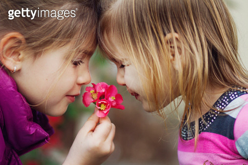 Girls and Cydonia Japonica - gettyimageskorea