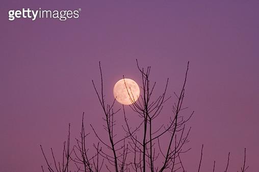 Full Moon in Winter - gettyimageskorea