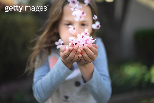 Girl is blowing small pink flowers from her hands - gettyimageskorea