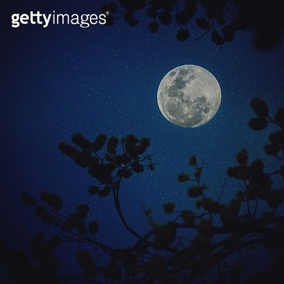 Low Angle View Of Moon Seen Through Silhouette Tree At Night - gettyimageskorea