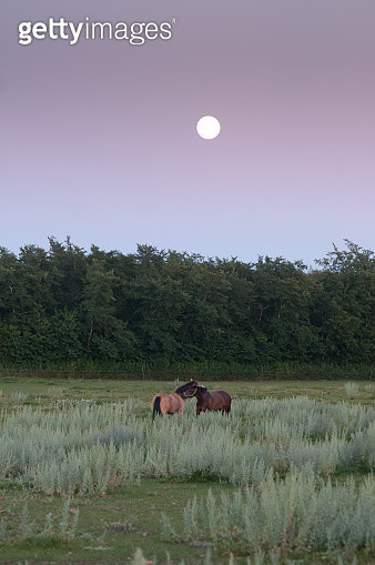 Two horses in a pasture during the full moon - gettyimageskorea