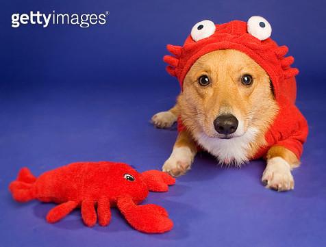 Halloween Pets - gettyimageskorea