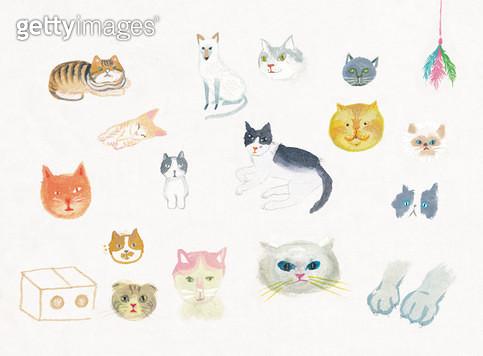 고양이 얼굴모음 - gettyimageskorea