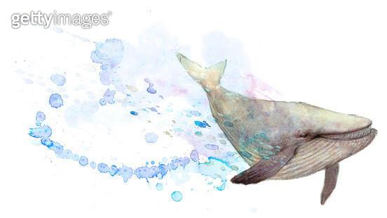 제목 : 고래2 (2011년)<br/>소재 : 수채화<br/>작품사이즈 : 39 X 22(㎝)<br/>작품 설명 : 유영하는 고래 - gettyimageskorea