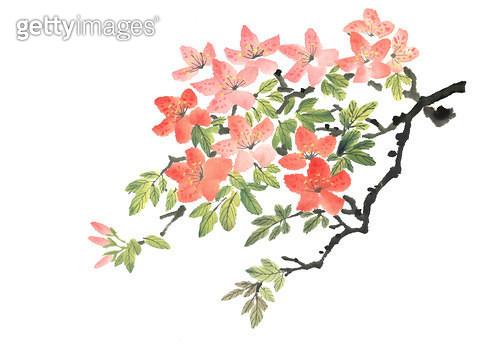 제목 : 철쭉 진달래 (2012년)<br/>소재 : 먹,물감,화선지<br/>작품사이즈 :  38X28.7㎝(㎝)<br/>작품 설명 : 산수,그림,진달래,철쭉,분홍 - gettyimageskorea