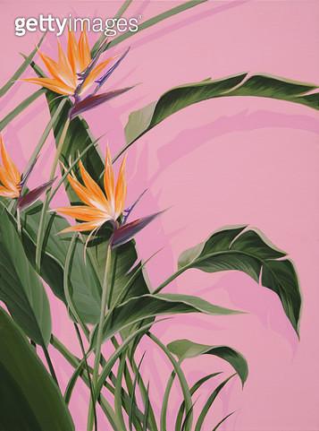 Bloom, 극락조 - gettyimageskorea