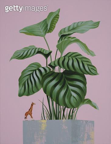 Blossom, 기린피규어, 갈라테아식물 - gettyimageskorea