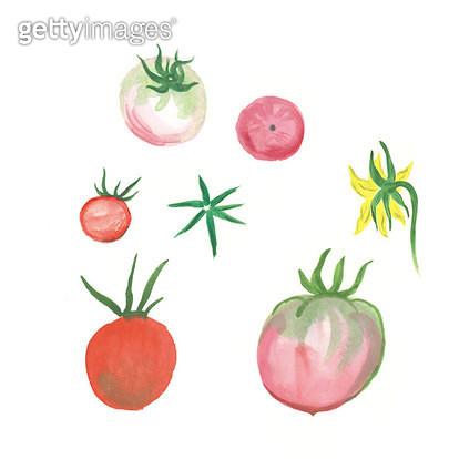 토마토 열매 일러스트 - gettyimageskorea