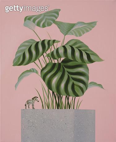 Blossom, 얼룩말피규어, 갈라테아식물 - gettyimageskorea