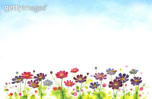 제목 : 코스모스 (2015년)<br/>소재 : 먹,물감,순지<br/>작품사이즈 : 54X35㎝(㎝)<br/>작품 설명 : 가을,꽃,코스모스,휴식 - gettyimageskorea