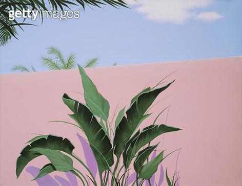 Pink land, 자연 속 식물 - gettyimageskorea