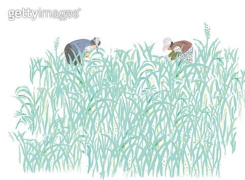 풀숲에서 일하는 농부 - gettyimageskorea