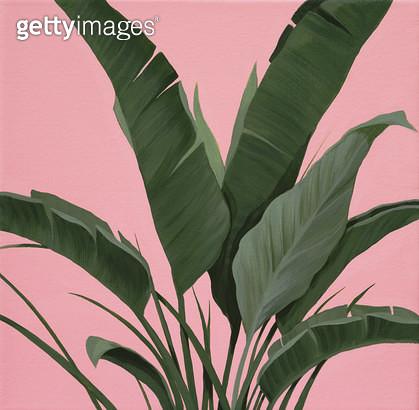 Pink plant, 그린과 핑크의 보색대비 - gettyimageskorea