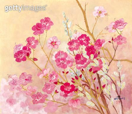 제목 : 초춘 (2009년)<br/>소재 : 한지 분채<br/>작품사이즈 : 46x40(㎝)<br/>작품 설명 : 봄 꽃 분홍 바람 흔들림 자연 식물 - gettyimageskorea