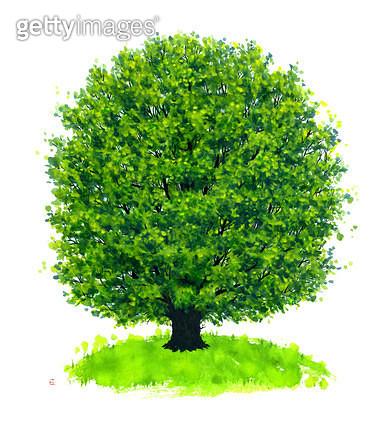 제목 : 울창한 나무 한그루 (2015년)<br/>소재 : 먹,물감,순지<br/>작품사이즈 :  43.3X49㎝(㎝)<br/>작품 설명 : 울창한 나무, 생명,기원, 먹그림 - gettyimageskorea