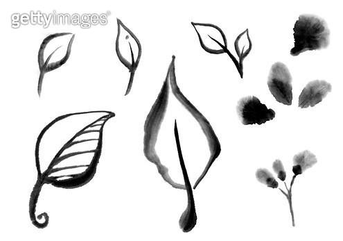 잎사귀, 꽃잎 수묵화 무늬 - gettyimageskorea