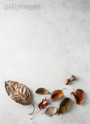 낙엽 - gettyimageskorea