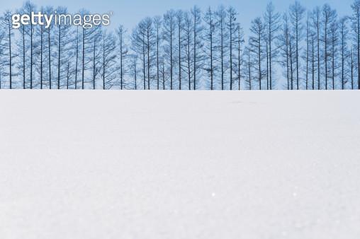 일본 홋카이도 비에이의 겨울 - gettyimageskorea