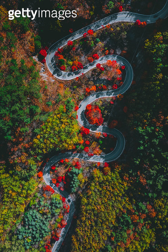 가을로 가는길 - gettyimageskorea