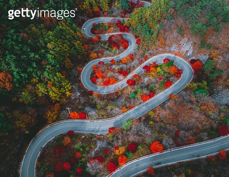 가을로 향하는 길 - gettyimageskorea