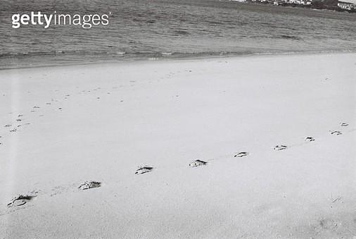 스페인,카미노,콤포스텔라,걷기,필름,여행,배낭여행,자연,풍경,발자국,해변 - gettyimageskorea