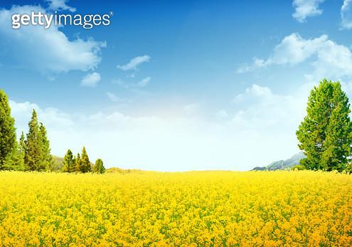 꽃밭 자연 풍경 - gettyimageskorea