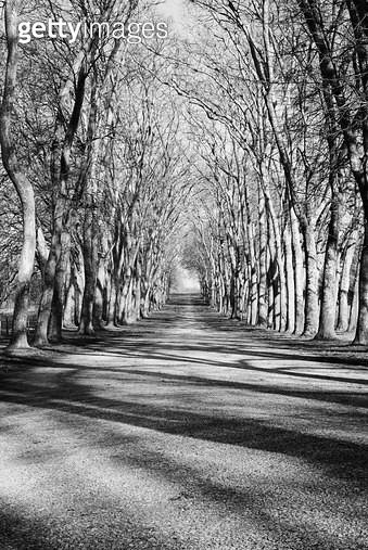 프랑스,자연,풍경,공원,호수,나무,그림자,숲 - gettyimageskorea