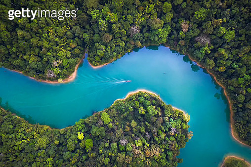 The boat drove through the canal along the dam amidst the richness of the forest. - gettyimageskorea