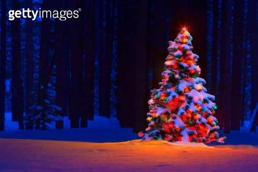 Christmas tree in a forest - gettyimageskorea