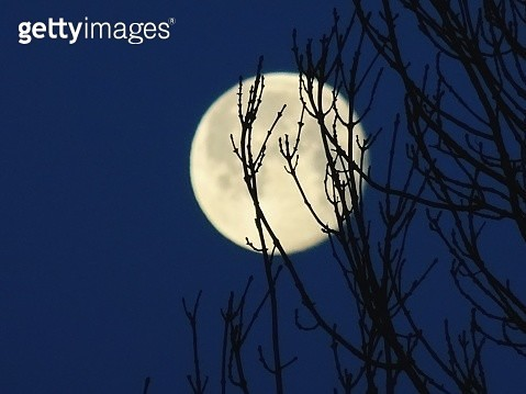 Low Angle View Of Silhouette Tree Against Sky At Night - gettyimageskorea