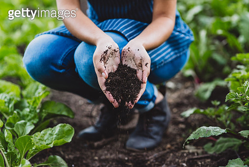 Soils provide plants with essential minerals and nutrients - gettyimageskorea