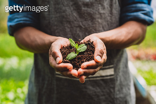 Closeup shot of an unrecognisable man holding a plant growing in soil in a garden - gettyimageskorea