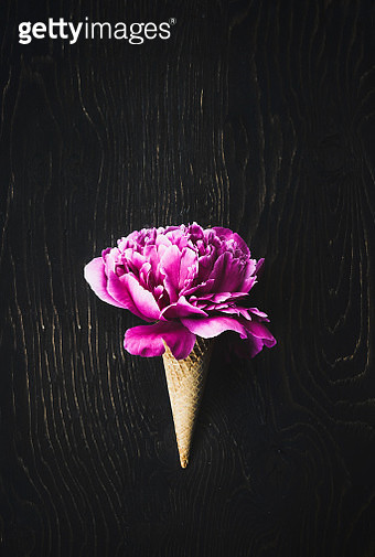 Peony fucshia in a wafer ice cream cone - gettyimageskorea