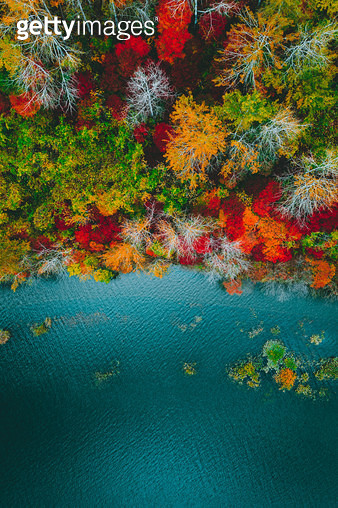 가을의 색채 - gettyimageskorea