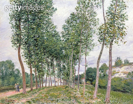 <b>Title</b> : The Avenue of Poplars along the Banks of the Loing, 1892 (oil on canvas)<br><b>Medium</b> : oil on canvas<br><b>Location</b> : Private Collection<br> - gettyimageskorea