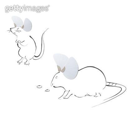생쥐 두마리 - gettyimageskorea