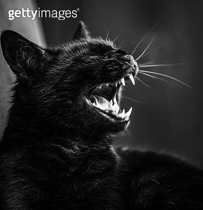 Close-Up Of A Cat - gettyimageskorea