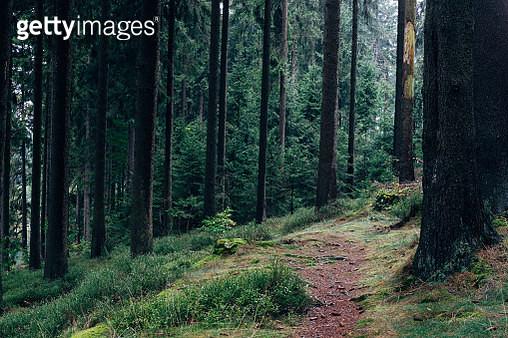 Stimmungsvoller Wald im Harz - gettyimageskorea